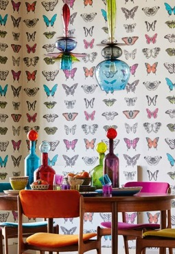 Amazilia Collection by Harlequin